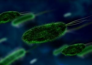 Bacterias en la Ecología