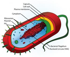 Bacterias en la Industria
