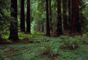 Importancia de los bosques for Porque son importantes los arboles wikipedia