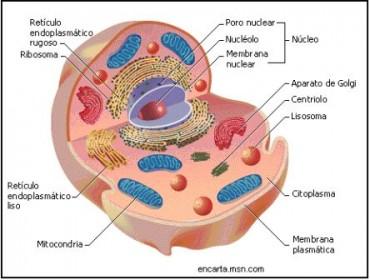 características de la celula procariota. esquema