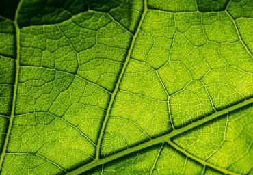 Fotosintesis-hojas