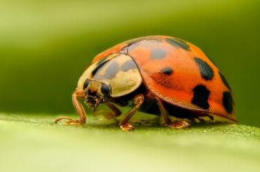 Vertebrados-invertebrados-2