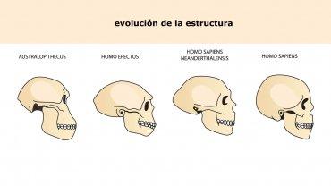 australopithecus-evolucion-humana