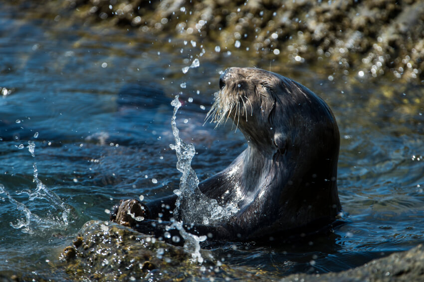 agua-vida-animal