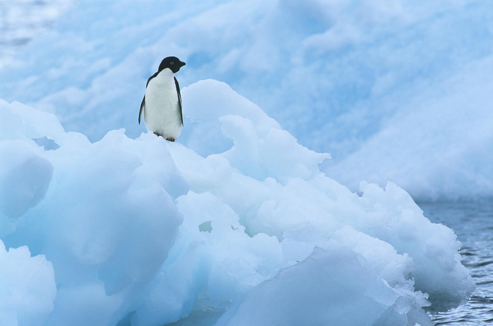 Tratado Antártico de 1959