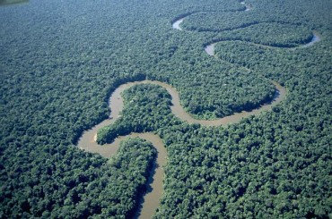 River in Amazonian Forest