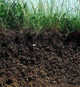 Importancia del suelo for El suelo y sus capas